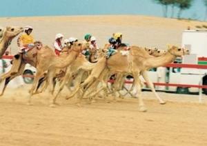Corrida de camelo