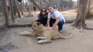 baby lion, não tão baby assim né? rs